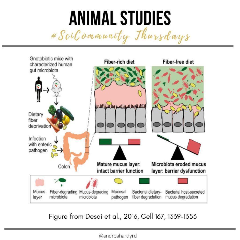 Image of @andreahardyrd Instagram post about animal studies